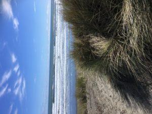 The Beach Himatangi Beach